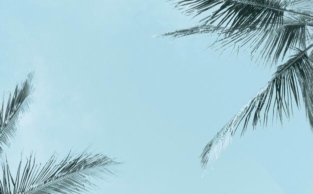 Palm trees in blue sky CTA